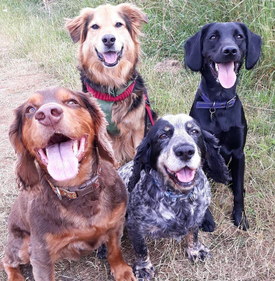 Reactive Dog Training Edinburgh Anxious 121 Rescue Dog Trainer Professional Local Near Me