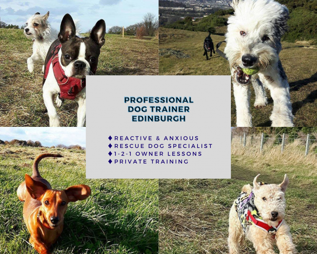 121 professional dog training costs prices Edinburgh Reactive Anxious Dog Training Rescue Leith Professional Expert Experienced scotland