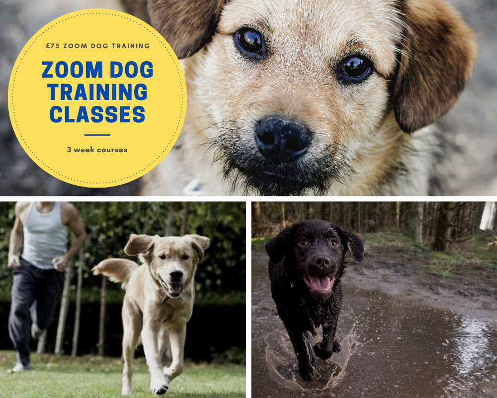 Zoom Online Dog Training Edinburgh Classes UK Professional 121 Puppy Trainer