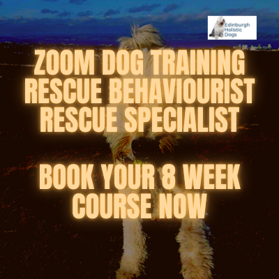Romanian Rescue Dog Training Edinburgh Zoom Lessons Anxiety Specialist 121 Professional